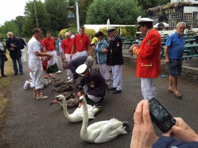 Swan Upping 2015